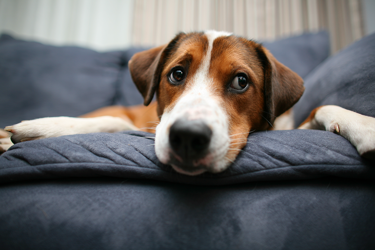 Treating Your Dog's Symptoms vs. Treating The Cause