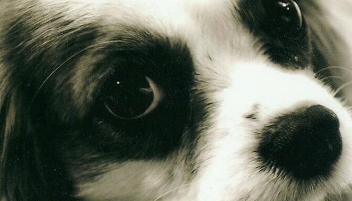 Syringomyelia in Dogs: The Dark Cloud Of Syringomyelia—Fight For Ella