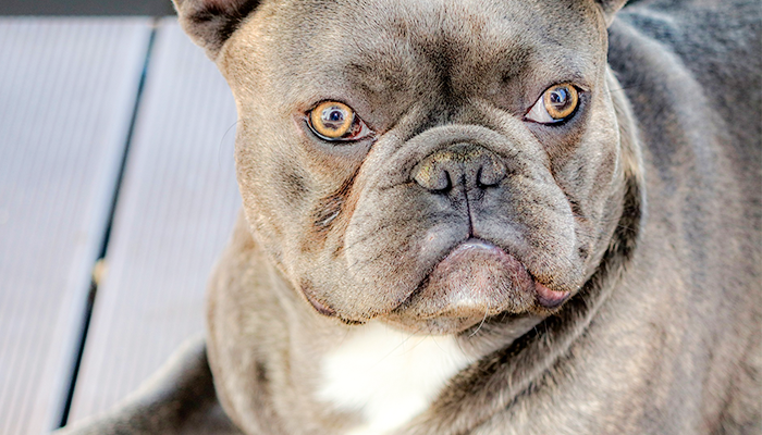 The Antidote to Canine Cancer: You Will Never Look At Fat The Same Way Again