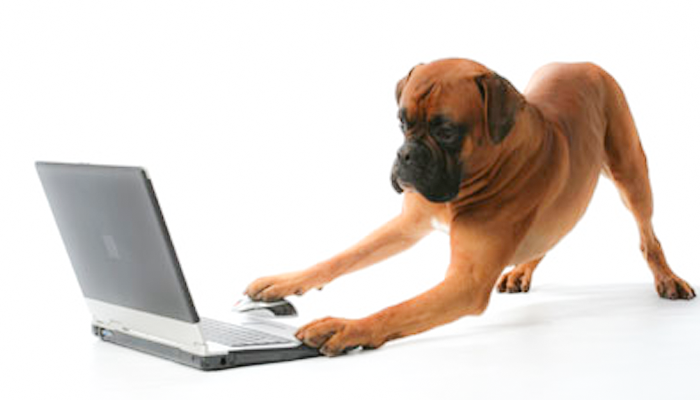 Veterinary Reasonable Expectations: The Ability to Discuss Your Internet Research With Your Vet