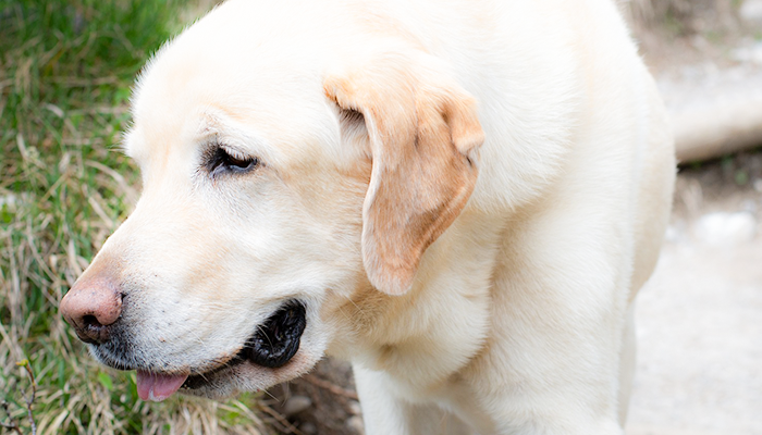 Understanding Canine Hip Dysplasia: Hip Dysplasia Prevention And Treatment Options