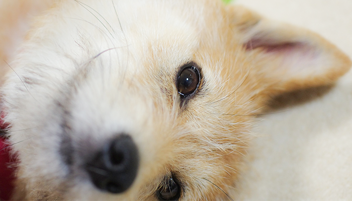 Chiropractic Care for Dogs: Don't Knock It Until You Tried It