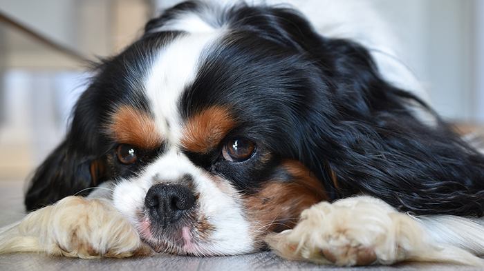 Kidney Disease in Dogs – Say What? Canine Kidneys and the Associated Verbiage