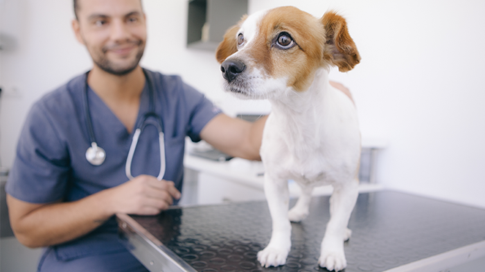 Picking an Animal Vet Clinic: Are Large Clinics Better?