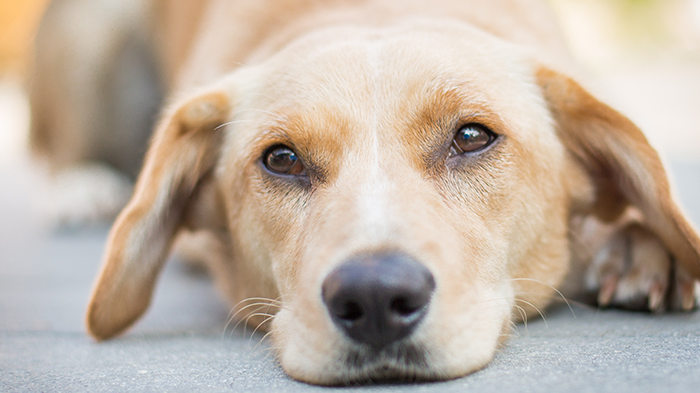 Reiki for Dogs: Is it real?