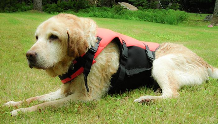 Idiopathic Vestibular Disease in Dogs: Phoenix's Story