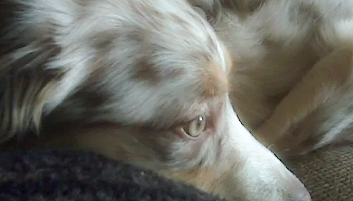Lacking Diagnosis Frustration: What Doesn't Kill Her Will Make Her Stronger? Koda's Story