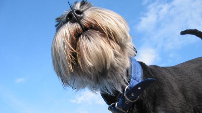 Inflammatory Bowel Disease in Dogs: Why I Dislike IBD