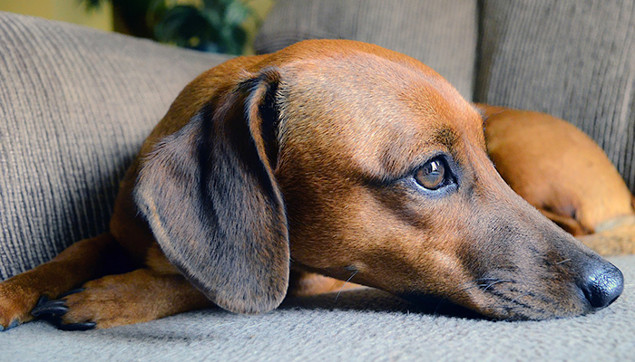 Veterinary Communication with Clients: Breaking The Bad News When It Could Be Something Else—Penny Does Not Have Cancer