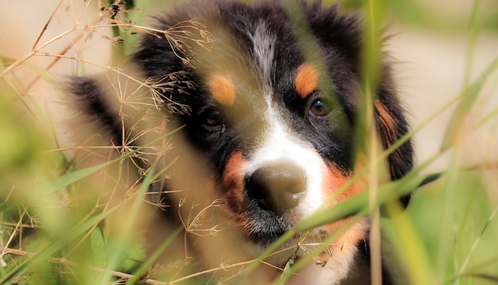 Bladder Infections in Dogs: What Causes Them?