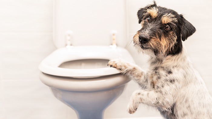 Vomiting in Dogs: What's in the Vomit?