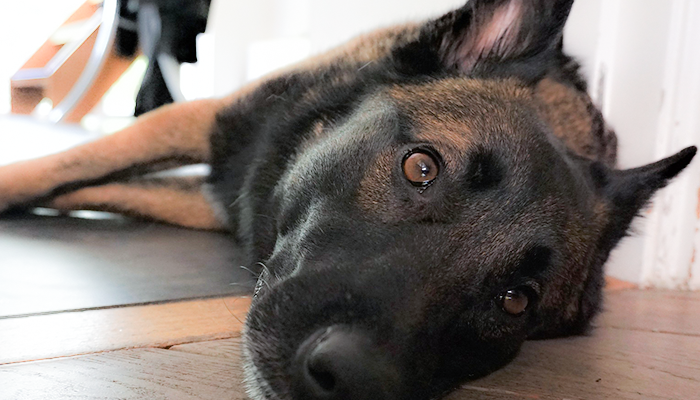 Assessing Dog Symptoms: What Is The Right Level Of Paranoia When It Comes To Your Dog's Symptoms?