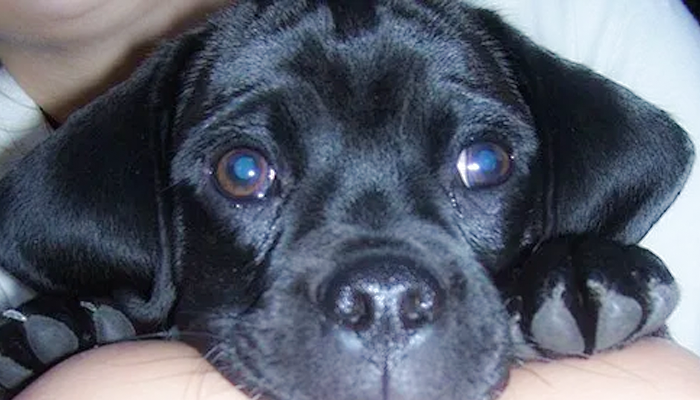 Chronic Bronchitis in a Dog: What Started with a Kennel Cough Diagnosis—Kolchak's Story