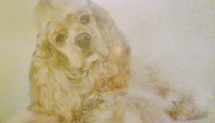 Canine Seizures Management: How We Handled Alex's Seizures