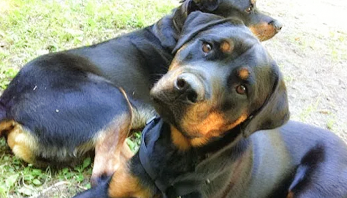 Losing a Heart Dog: Adopting A New Dog While Grieving For The Dog Of My Life