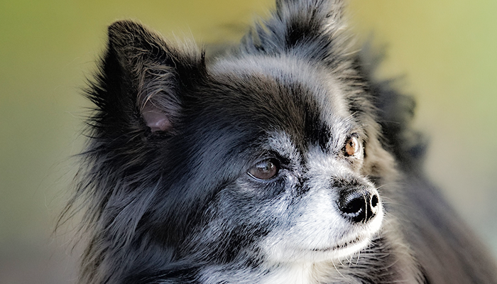 A Primer On Corneal Damage in Dogs