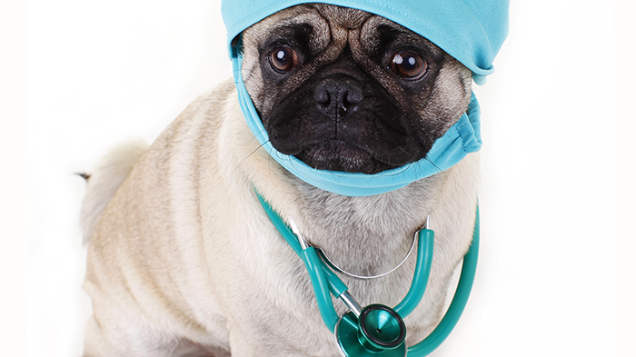 What Veterinarians Wish For? Veterinarians Answer What They Would Wish For If They Could Be Granted One Wish