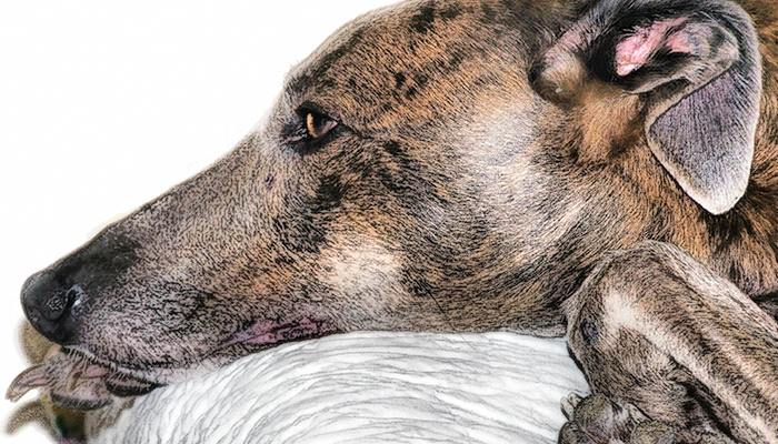 Unexplained Weight Loss in Dogs: Why Is My Dog Losing Weight?