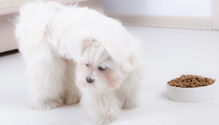 Loss of Appetite in Dogs: Why Did My Dog Stop Eating?