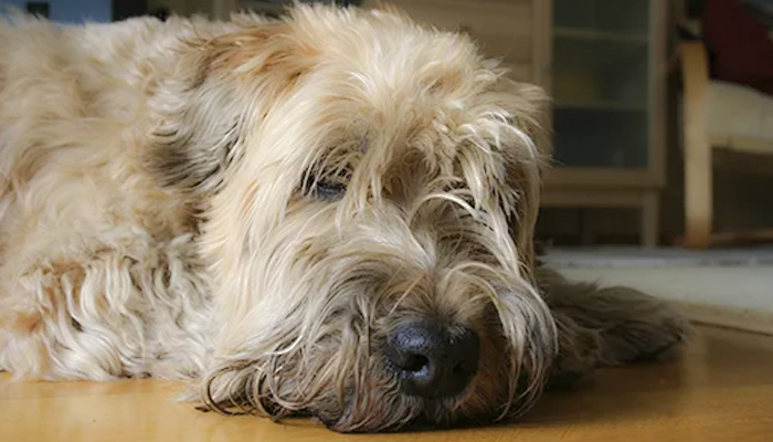 Unhealthy Gut—Unhealthy Dog: Mandy's Story