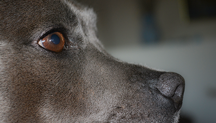 A Primer on Oral Tumors in Dogs