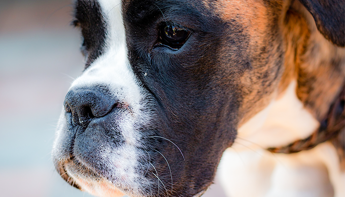 What Is That Bump on My Dog: Canine Lumps, Bumps, and Growths