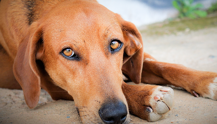 Symptoms To Watch For In Your Dog: Changes In Behavior