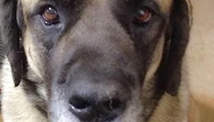 Dog Addison's Diagnosis: Gracie Lou Clough's Story