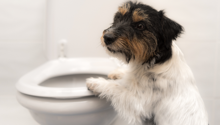 Dog Poop Consistency: From Hard to Watery—What Does It Mean?
