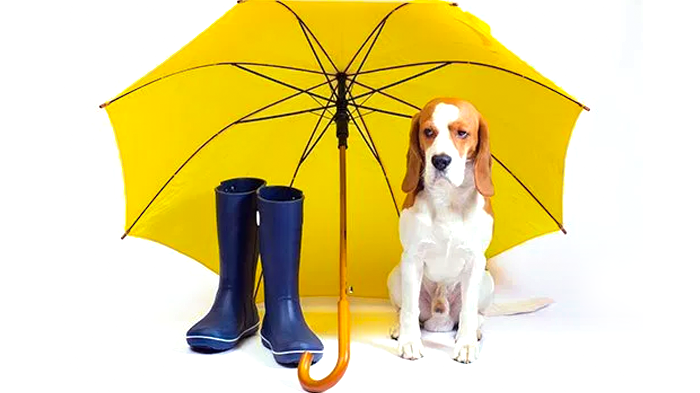 Weather and Dog Arthritis: Effects of Weather on Arthritis and Other Inflammatory Conditions in Dogs