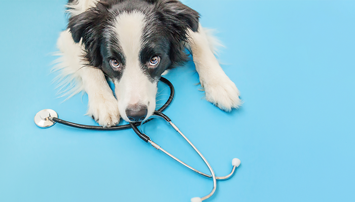 Veterinary Kidney Dialysis: Can Hemodialysis Help Your Dog?