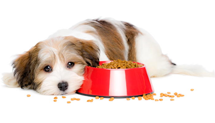 Is Loss of Appetite an Emergency?