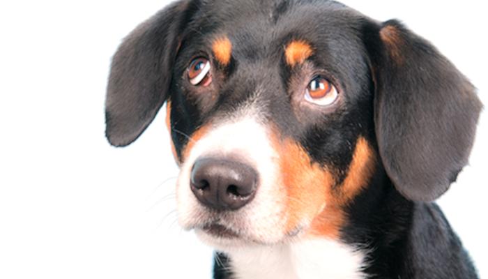 Is Dog Bad Breath an Emergency?