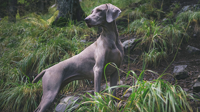 Canine Lyme Vaccination: Veterinarians Share Their Opinion About Lyme Vaccination in Dogs – Yay or Nay?