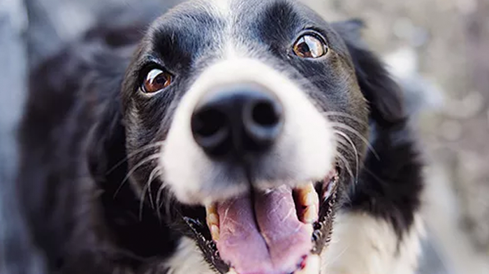 Teeth Chattering in Dogs: What Does It Mean?
