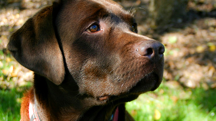 Alabama Rot in Dogs: Four Words You Don't Want to Hear In the Same Sentence as your Dog's Name—Cutaneous and Renal Glomerular Vasculopathy (CRGV) aka Alabama Rot