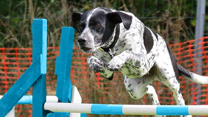 Using Neurophysiology for Dogs: Canine Athlete Injury Prevention beyond the Traditional Means