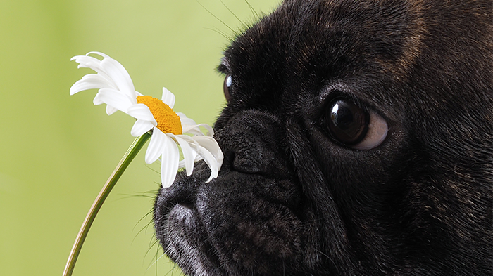 Excessive Sneezing in Dogs: How Much Sneezing Is Too Much?