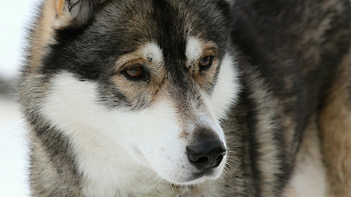 Seizures or Convulsions in Dogs: What Can Seizures Look Like and What Can Cause Them?