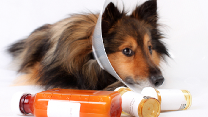 Pain Management For Dogs: Types of Pain Medications for Dogs And What They Do