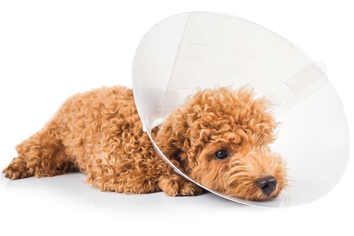 Dog Symptoms: When Is It an Emergency?