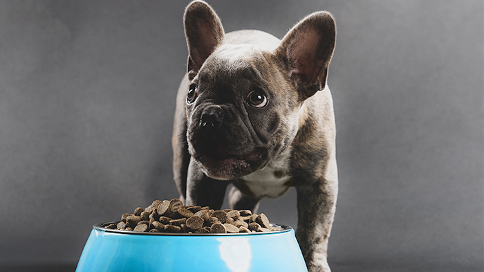 Can Dog Food Cause Seizures?