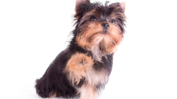 Why Is My Dog Limping? Causes of Lameness in Dogs—Symptoms To Watch For In Your Dog