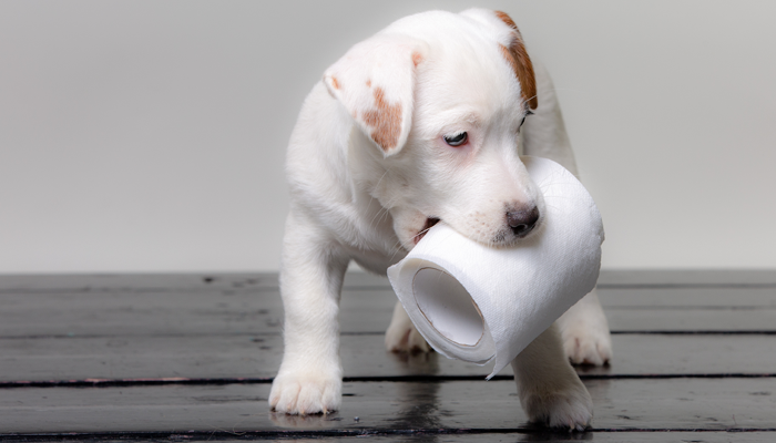 My Dog's Poop: What Can You Learn from Your Dog's Stool