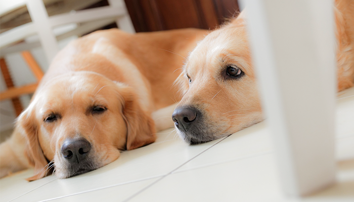 Dogs and Coronaviruses: Do We Share Coronavirus Infections with Dogs?