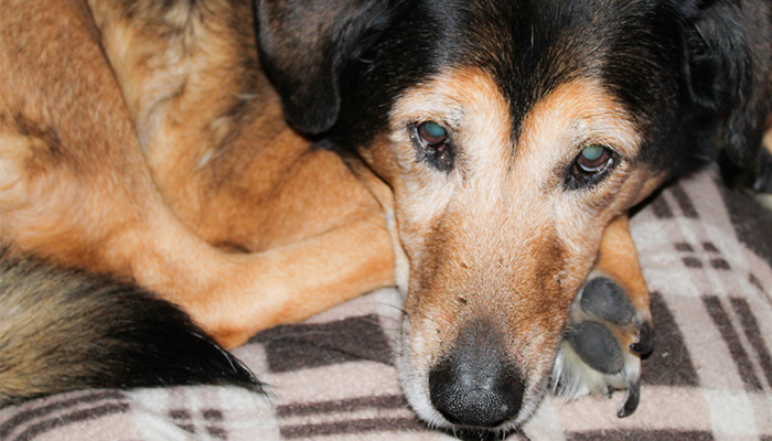 Seizures in Senior Dogs: Maia's Story