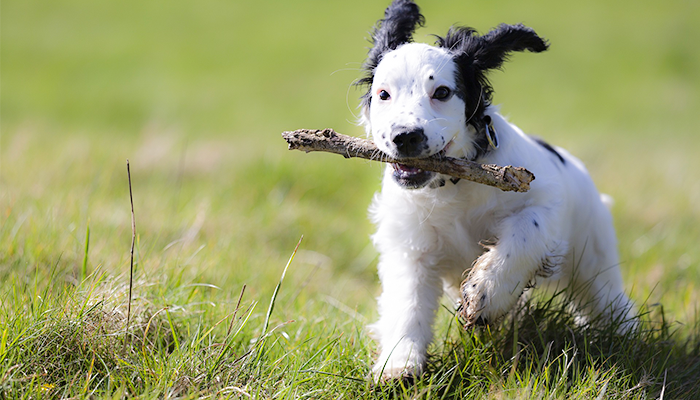 My Dog Won't Play: How to Facilitate Playful Behavior in Your Dog