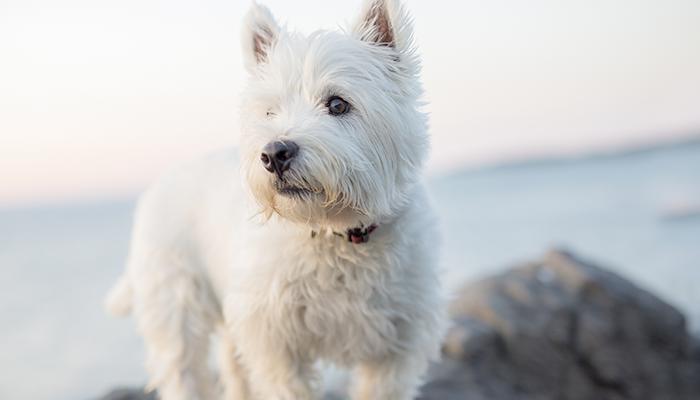 Internal Bleeding in a Dog: Lucy's Sudden Weakness