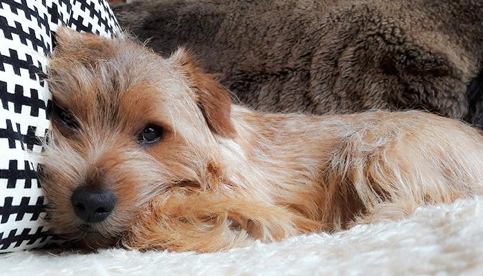 Change in Behavior in a Dog: Teddy's Subtle Symptom