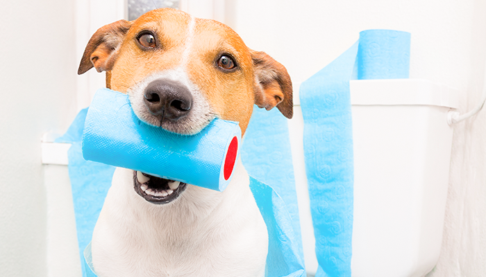 Treating Dog Diarrhea at Home: How Can You Fix Your Dog's Runny Poop?